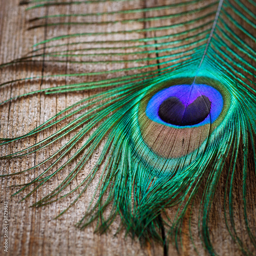 peacocks feather on wooden board