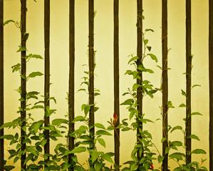 Vine plant climbing a railing