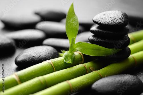 Fototapeten,pflanze,bambus,fels,kurort