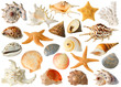 Leinwanddruck Bild - Isolated sea objects. Large collection of sea shells and stars isolated on white background