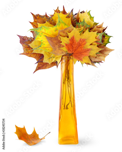 Autumn leaves in a vase isolated on white