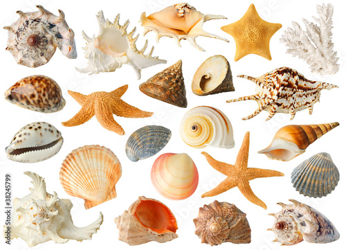 Fototapeta Isolated sea objects. Large collection of sea shells and stars isolated on white background