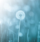 Dandelion - 38246971