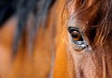 Fototapete Arabian - Bellen - Nutztiere