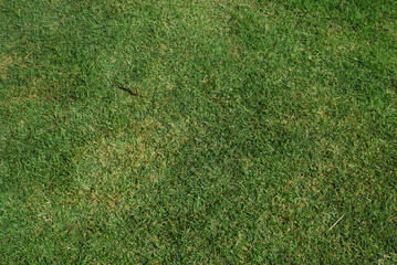 Lawn Texture