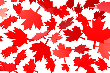 canadian maple leafs autumn leaves