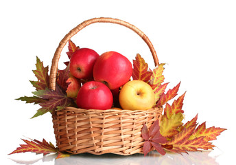 beautiful autumn harvest in basket and leaves isolated on white