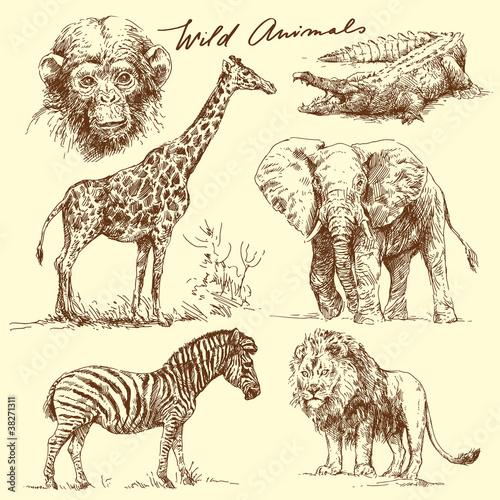 wild animal