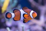 Fototapete Australien - Exotisch - Fische