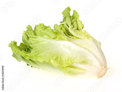 Salat / Endivien freigestellt
