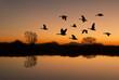 Leinwandbild Motiv Canadian Geese at Sunset