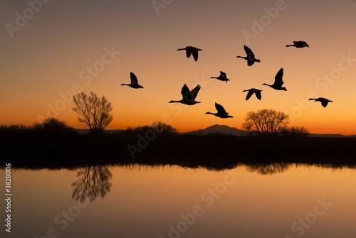Leinwanddruck Bild Canadian Geese at Sunset