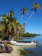 Boat and coconute trees