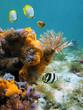 Tube-worm and orange sea-sponges