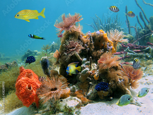 Colorful sealife