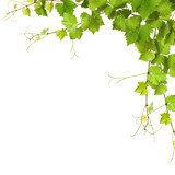 Fototapety Collage of vine leaves