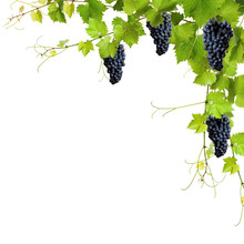 Kolaż z liści winorośli i winogron niebieski