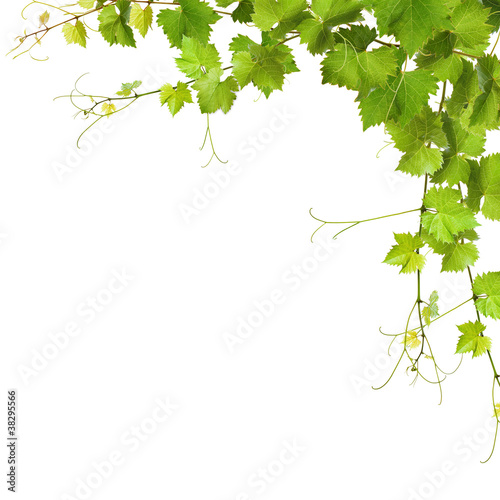 Collage of vine leaves