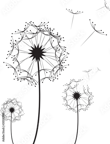 Three dandelion flowers blowing in the wind