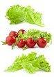 Lettuce and tomatoes on white background