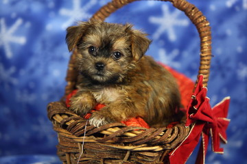 Puppy Sitting in Basket with Bow