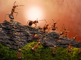 defence of great wall, ants guard border of federation
