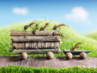 team of ants carry logs with trail car