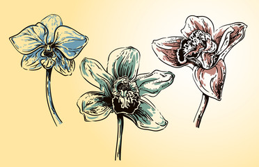 vintage orchid flowers