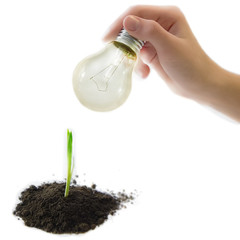 Hand shining a sprout of a plant by electric bulb