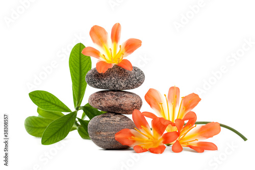 Zen stones with flowers and green plant