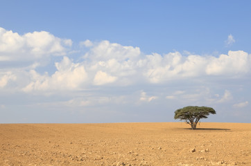Lonely tree in desert