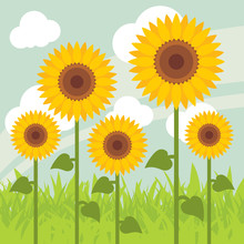 Yellow sunflowers landscape  illustration