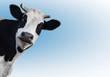 cow 1 (2)(10).jpg
