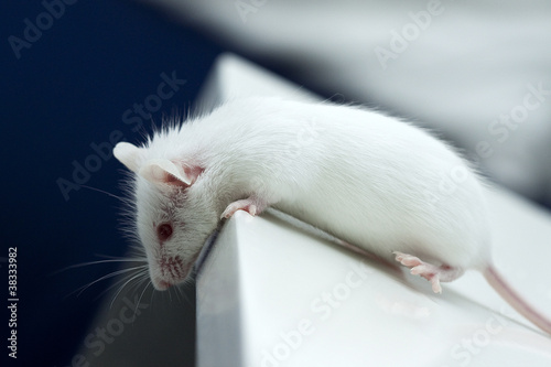 Mouse on the edge