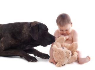 Chien Cane Corso à coté d'un bébé de 10 mois