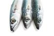 tre sgombri - mackerel closeup