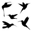 Постер, плакат: Kolibri