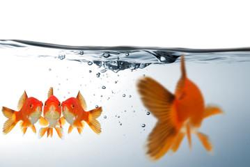 Fische in Angst