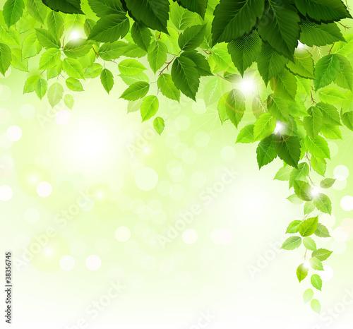 Lato gałąź z świeżymi zielonymi liśćmi