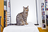 cute cat sitting on a table