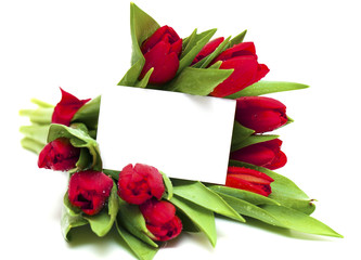 red tulips and blank card