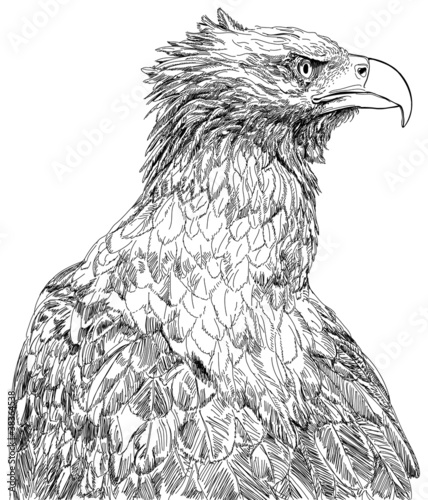 sitting eagle - vector black & white drawing