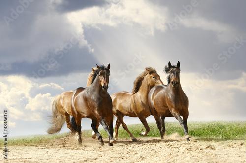 konie-biegna