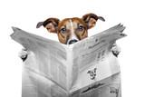 dog reading a newspaper - Fine Art prints