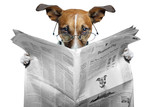 Fototapety dog reading a newspaper