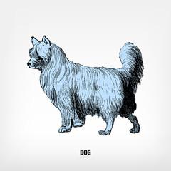 Engraving vintage Dog