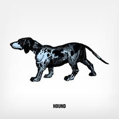 Engraving vintage Dog Hound