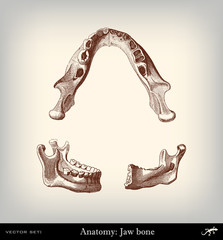 Engraving vintage Jaw bone