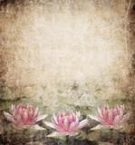 Fototapety Water Lily