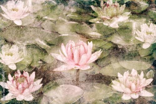 Foto op Plexiglas Lotusbloem Water Lily